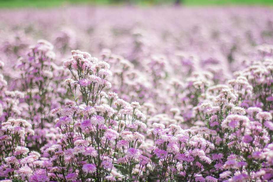 สวนดอกไม้ กู๊เนียร์
