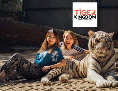 Tiger Kingdom – คุ้มเสือ
