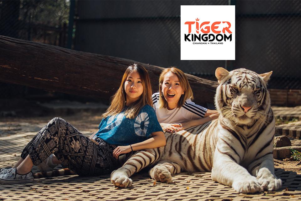 Tiger Kingdom - คุ้มเสือ